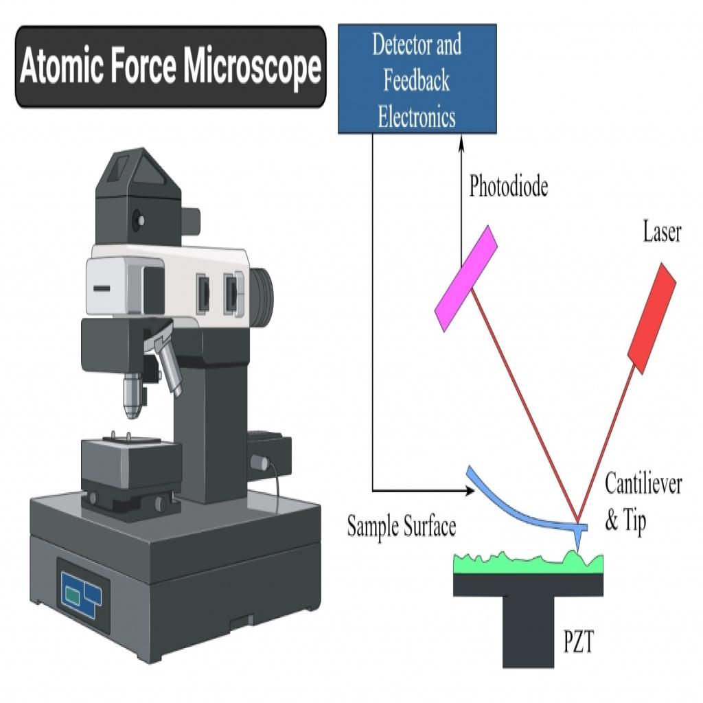 مجهر القوة الذريه  Atomic Force Microscopy