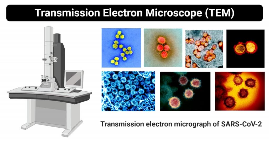 المجهر الالكتروني النفاذ Transmission Electron Microscope