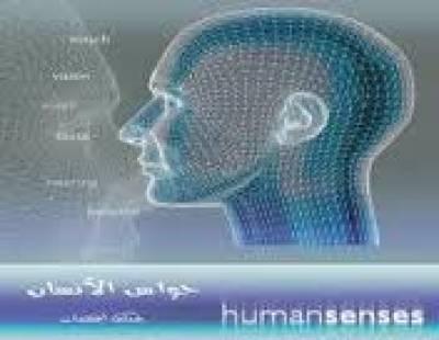 حواس الإنسان - التذوق والشم
